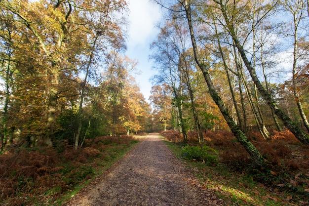 Smalle weg in de buurt van veel bomen in het new forest in de buurt van brockenhurst, verenigd koninkrijk