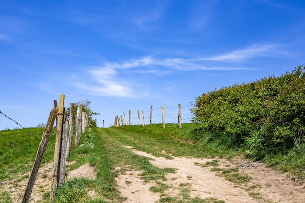 Smalle weg in een groen landbouwgebied overdag