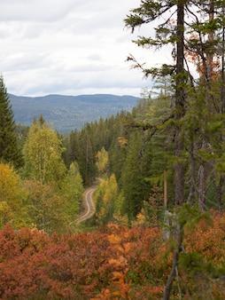 Smalle weg omringd door prachtige herfstkleurige bomen in noorwegen