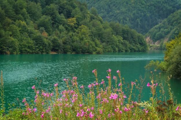 Smaragdgroen water in de rivier en paarse bloemen op een achtergrond van beboste bergen
