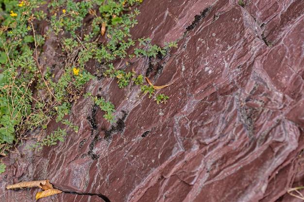 Smaragdgroene bergbeek stroomt door een rode stenen kloof in de franse wildernis.