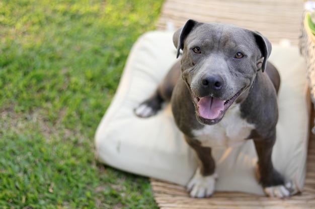 Smily hond