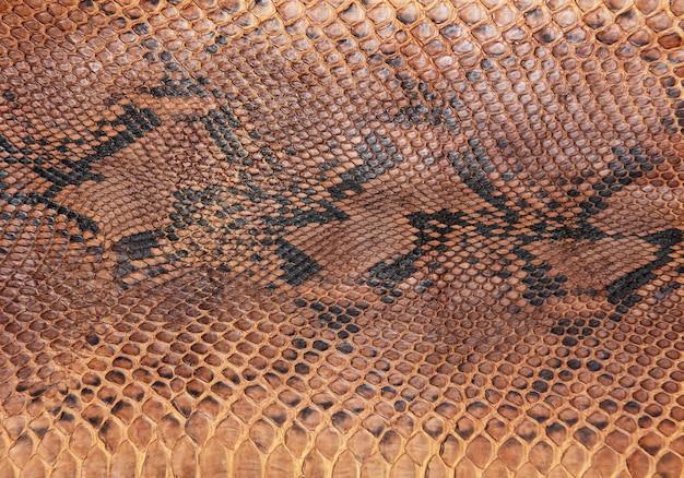 Snake skin textuur achtergrond