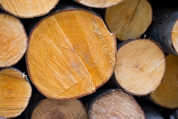 Sneden van verschillende bomen (houten cirkels).