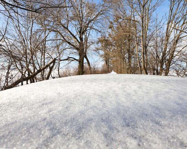 Sneeuw bedekt autodak en weg met bomen bedekt met sneeuw, close-up van auto-onderdeel en winter natuur, close-up