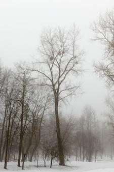 Sneeuw bedekt de grond en bomen in de winter bij mistig weer, bomen in de winter in nevel, wintermist en bomen en andere planten