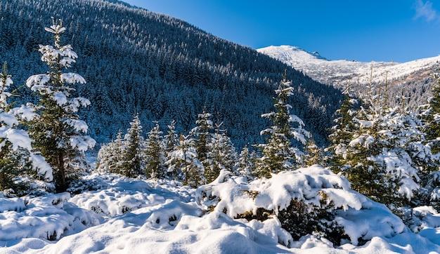 Sneeuw bedekt karpaten en heuvels met enorme sneeuwlaag van sneeuwwitte sneeuw