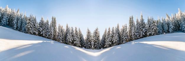 Sneeuw bedekt landschap van pijnbomen