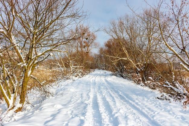 Sneeuw bedekt landweg tussen bomen en struiken in zonnige winterdag