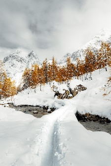 Sneeuw bedekt veld en bomen onder bewolkte hemel