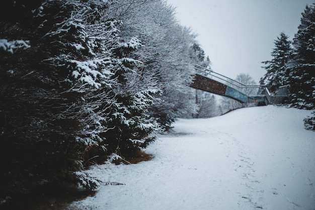 Sneeuw bedekt veld en bomen overdag