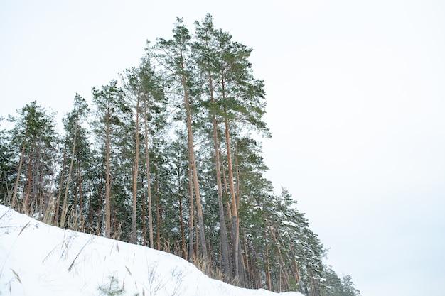 Sneeuw bedekte bomen in de bergen. mooi winterlandschap.