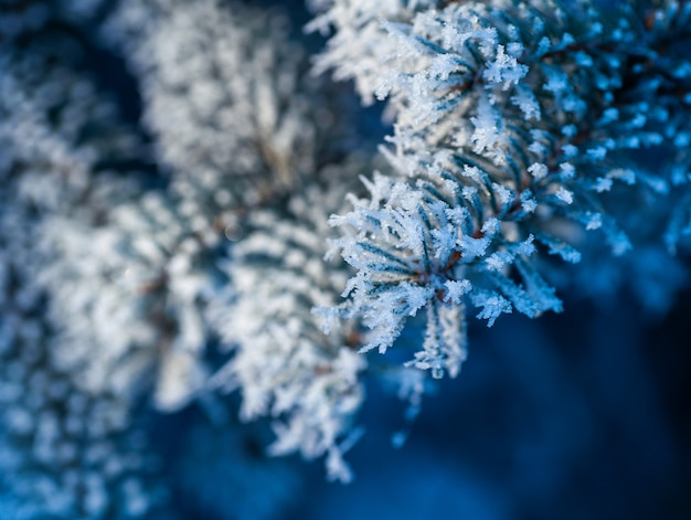 Sneeuw bedekte boomtakken in winter park