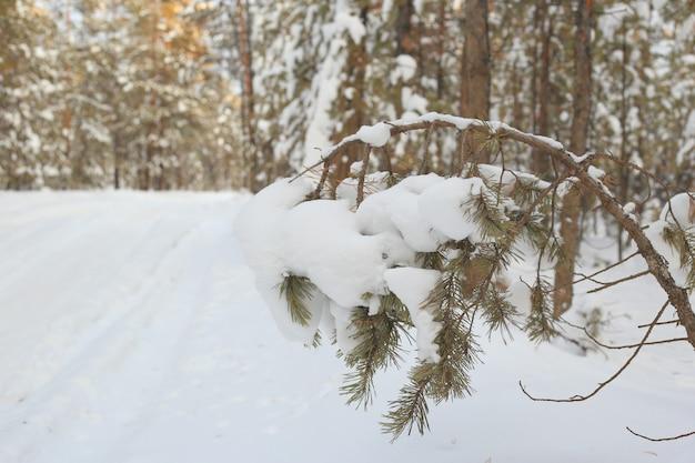 Sneeuw bedekte tak