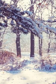 Sneeuw behandelde bomen in het de winterbos