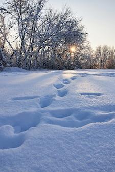 Sneeuw behandelde bomen met zonsondergang