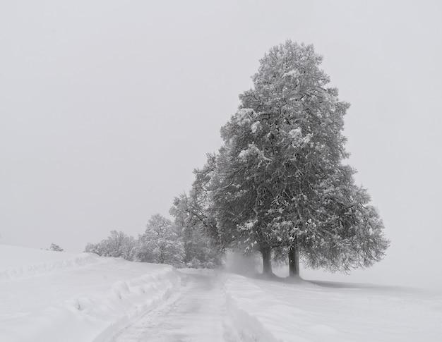 Sneeuw behandelde bomen op besneeuwde grond overdag