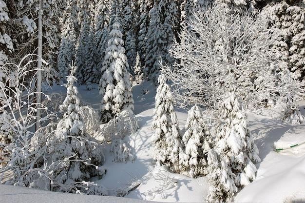 Sneeuw behandelde sparren in bergen