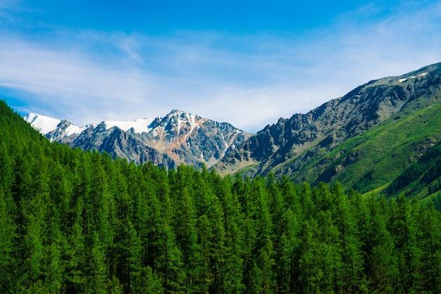 Sneeuw bergtop achter beboste heuvel onder blauwe heldere hemel. rotsachtige rand boven naaldbos. sfeervol minimalistisch landschap van majestueuze natuur.