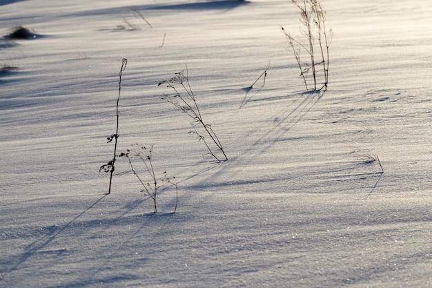 Sneeuw die viel tijdens een sneeuwval en droog gras, sneeuwval in de winter en witte pluizige koude sneeuw en gras, gras en sneeuw in de winter