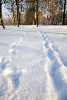 Sneeuw drijft met sporen van de persoon die ze onlangs heeft doorgegeven, koude winterseizoen