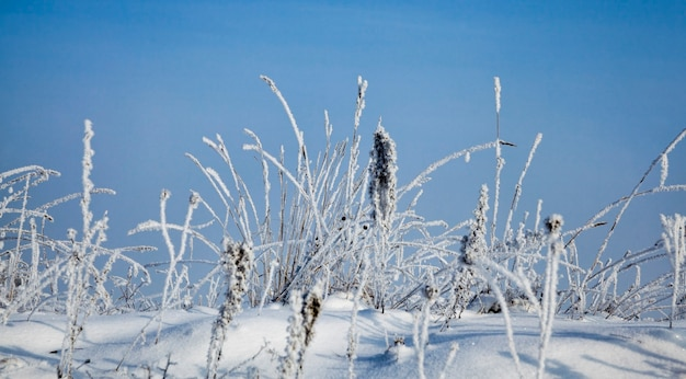 Sneeuw en ijs bedekt dood gras in het winterseizoen, blauwe lucht en zonnig weer, prachtige natuur en specifieke kenmerken van winterweer in het wild