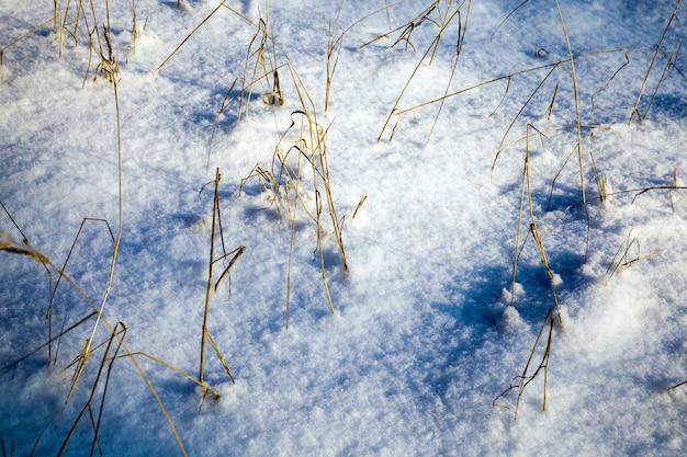 Sneeuw en ijs bedekt dood gras in het winterseizoen, prachtige natuur en specifieke kenmerken van winterweer in het wild
