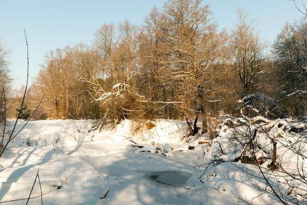 Sneeuw en met ijs bedekt gras en andere planten in de winter