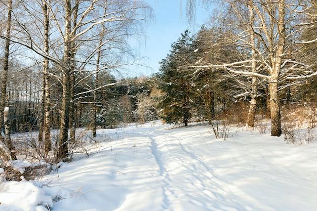 Sneeuw en met ijs bedekte bomen en andere planten in de winter