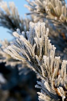 Sneeuw gefotografeerd in het winterseizoen, die verscheen na een sneeuwval. detailopname, Premium Foto