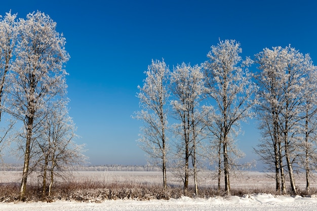 Sneeuw in boslandschap