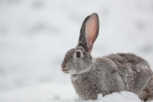 Sneeuw konijn haas winter
