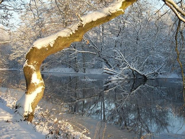 Sneeuw mirroring mooie rivier vorst winter boom