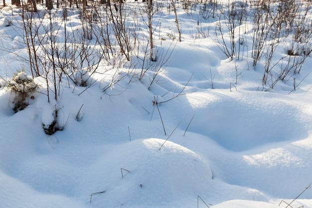 Sneeuwbanken in bos