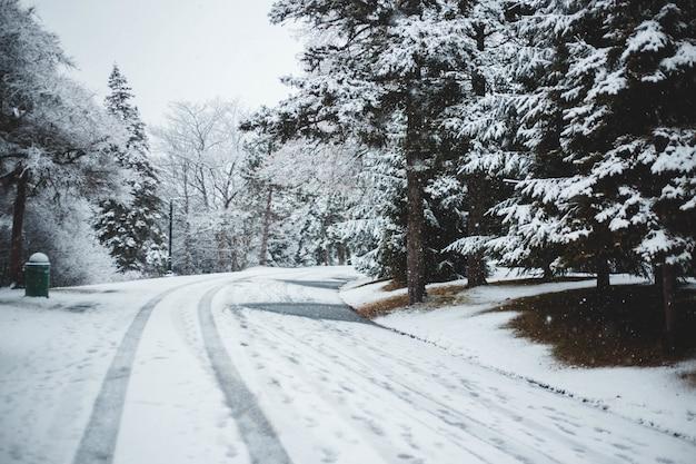 Sneeuwbedekkende weg dichtbij pijnbomen