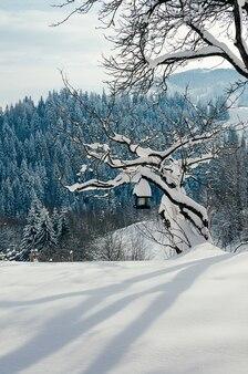 Sneeuwhelling met een vogelvoeder op een boom mooie winterse landelijke landschapsdorp of boerderij zonnige dag