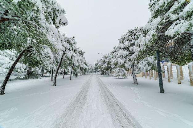 Sneeuwlandschap in madrid vanwege de sneeuwstorm filomena. park, straten, bomen allemaal bedekt met sneeuw. spanje