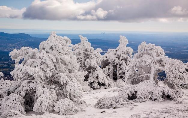 Sneeuwlandschap met bevroren bos in het nationale park van sierra de guadarrama, spanje