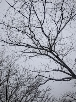 Sneeuwval en met sneeuw bedekte boomtoppen tegen de achtergrond van grijze wolken die de hele lucht bedekten.