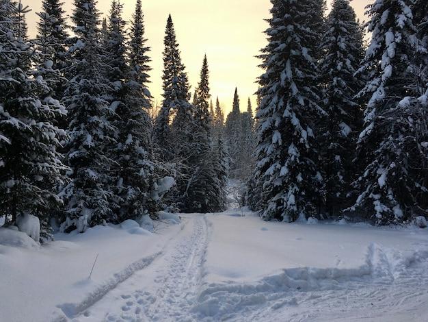 Sneeuwval in bergbos met besneeuwde sparren, sparren en berken. sneeuwbanken op de helling van de heuvel. winterlandschap - besneeuwde achtergrond met ruimte voor tekst. winter reizen en rust concept