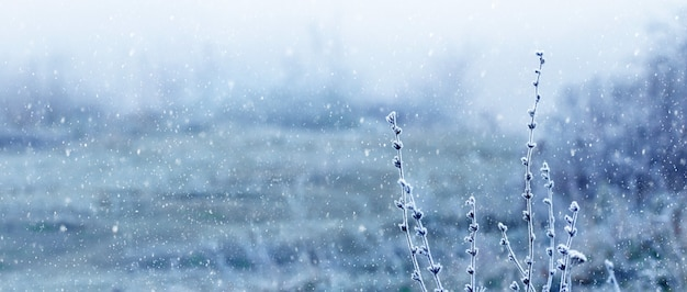 Sneeuwval in het veld. met vorst bedekte twijgen van planten op een onscherpe achtergrond tijdens een sneeuwval. kerstmis en nieuwjaar achtergrond