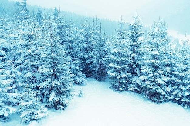 Sneeuwval over berg winterbos