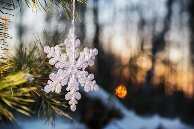 Sneeuwvlok sneeuwbos bij zonsondergang