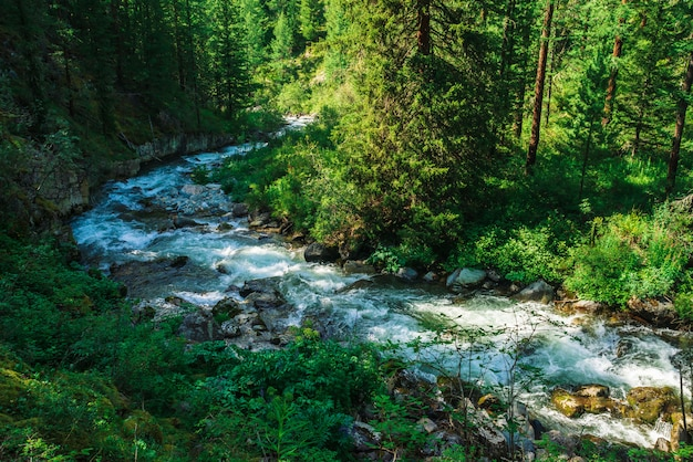 Snelle kronkelige stroom in wilde bergkreek in vallei.