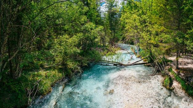 Snelle rivier in het bos