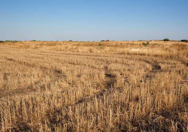 Snijd cirkels in het veld