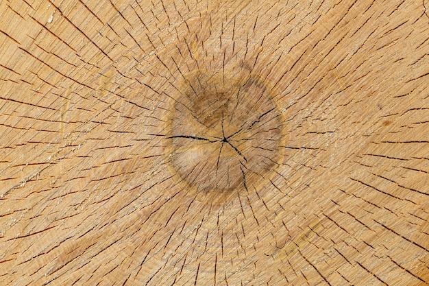 Snijd pijnboomstammen met gebarsten close-up. hoge kwaliteit foto