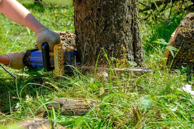 Snijden boom met kettingzaag handen
