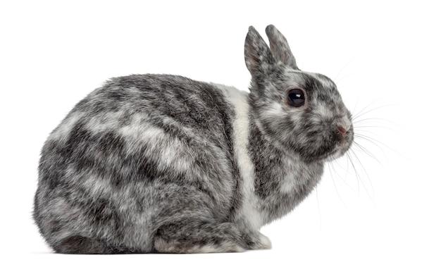 Snoei konijn dat op witte oppervlakte wordt geïsoleerd