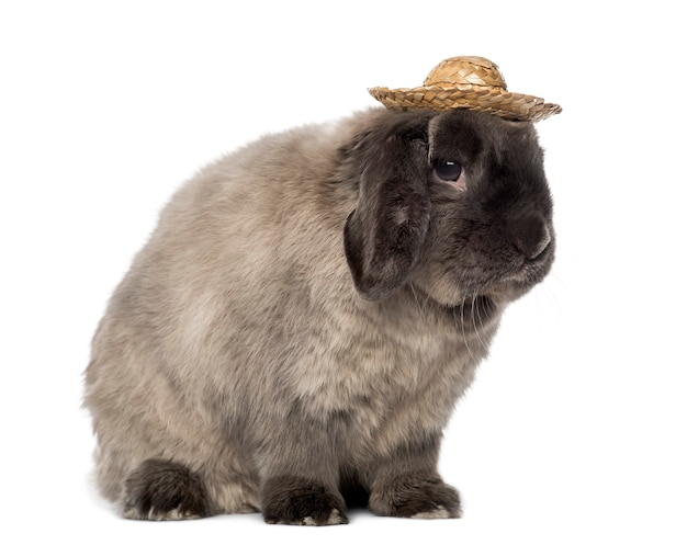 Snoei konijn met een hoed, geïsoleerd op wit